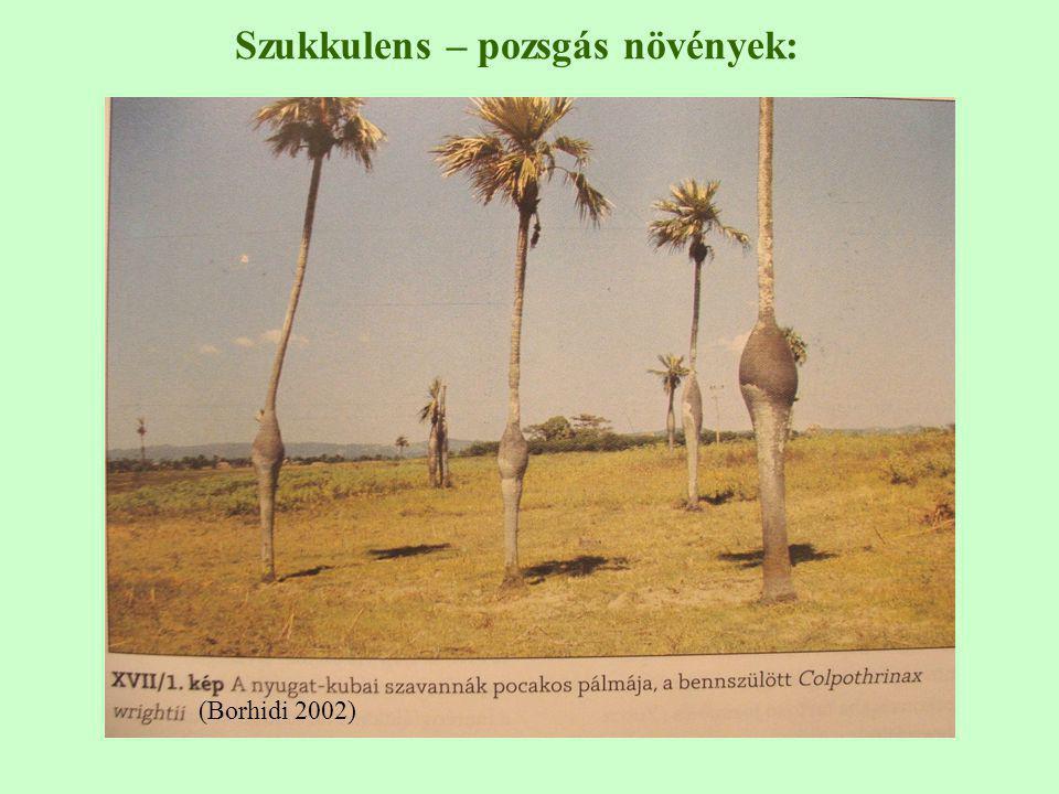 Szukkulens – pozsgás növények: