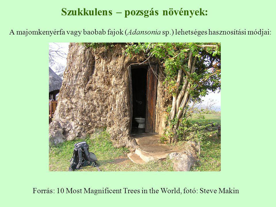 Forrás: 10 Most Magnificent Trees in the World, fotó: Steve Makin