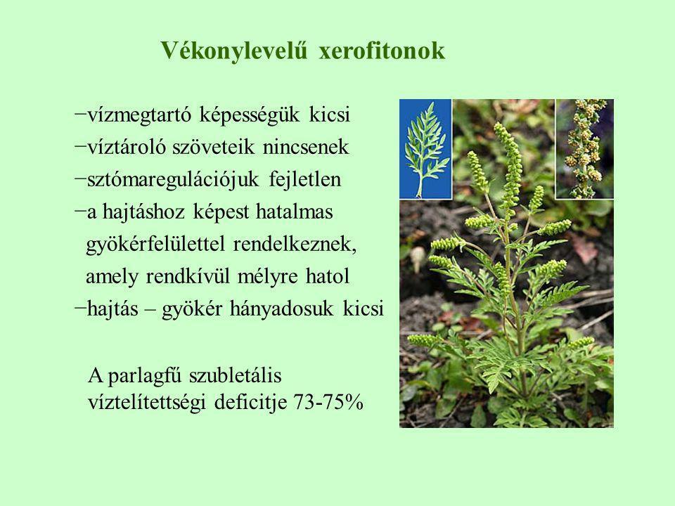 Vékonylevelű xerofitonok