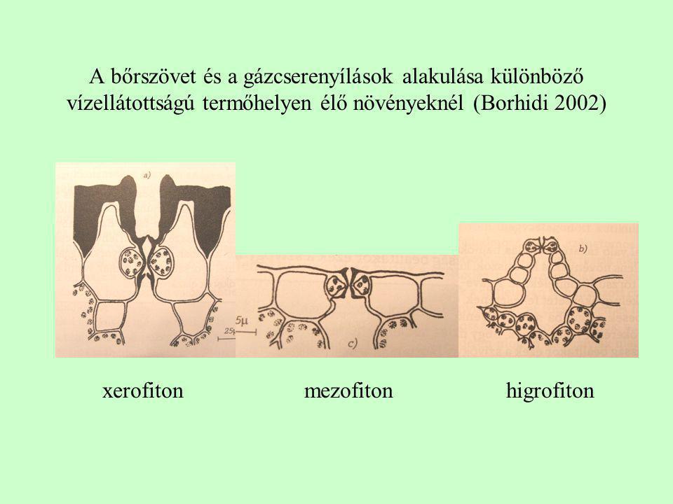 xerofiton mezofiton higrofiton