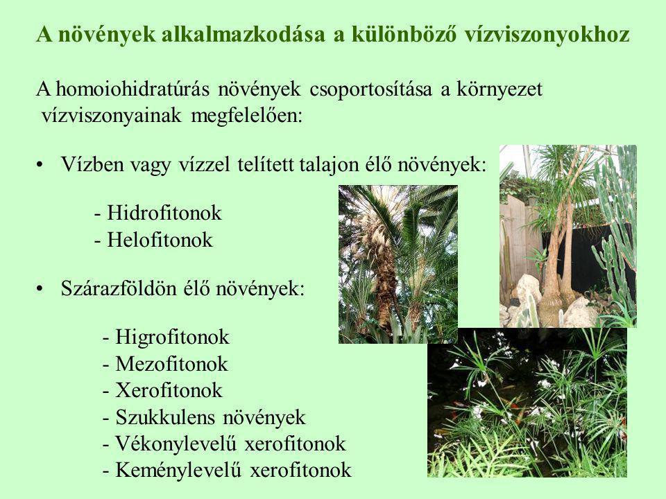 A növények alkalmazkodása a különböző vízviszonyokhoz