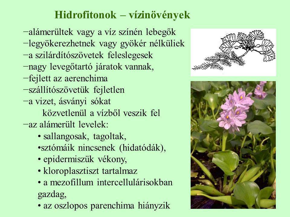 Hidrofitonok – vízinövények