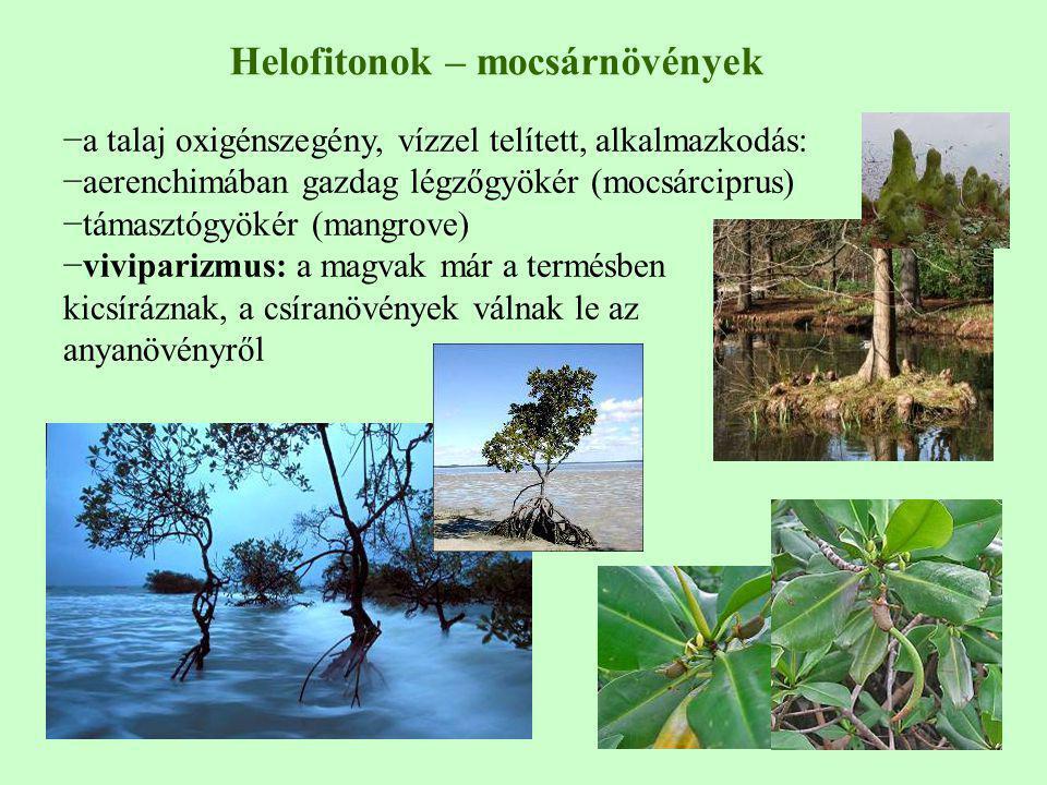 Helofitonok – mocsárnövények