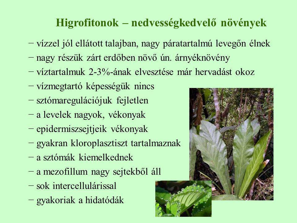 Higrofitonok – nedvességkedvelő növények