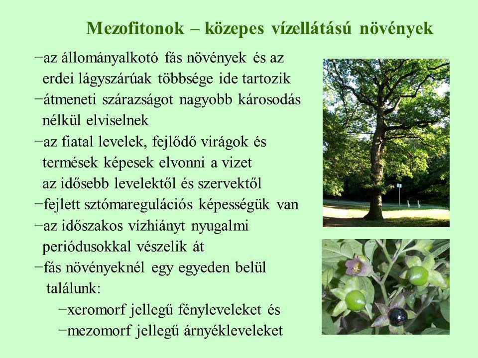 Mezofitonok – közepes vízellátású növények