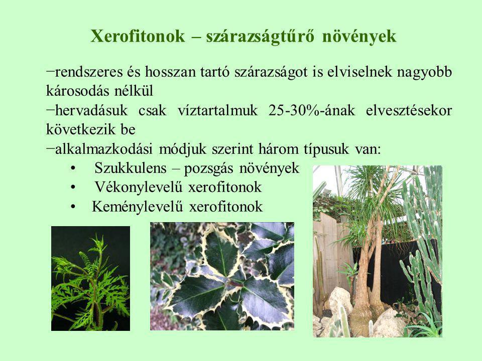 Xerofitonok – szárazságtűrő növények