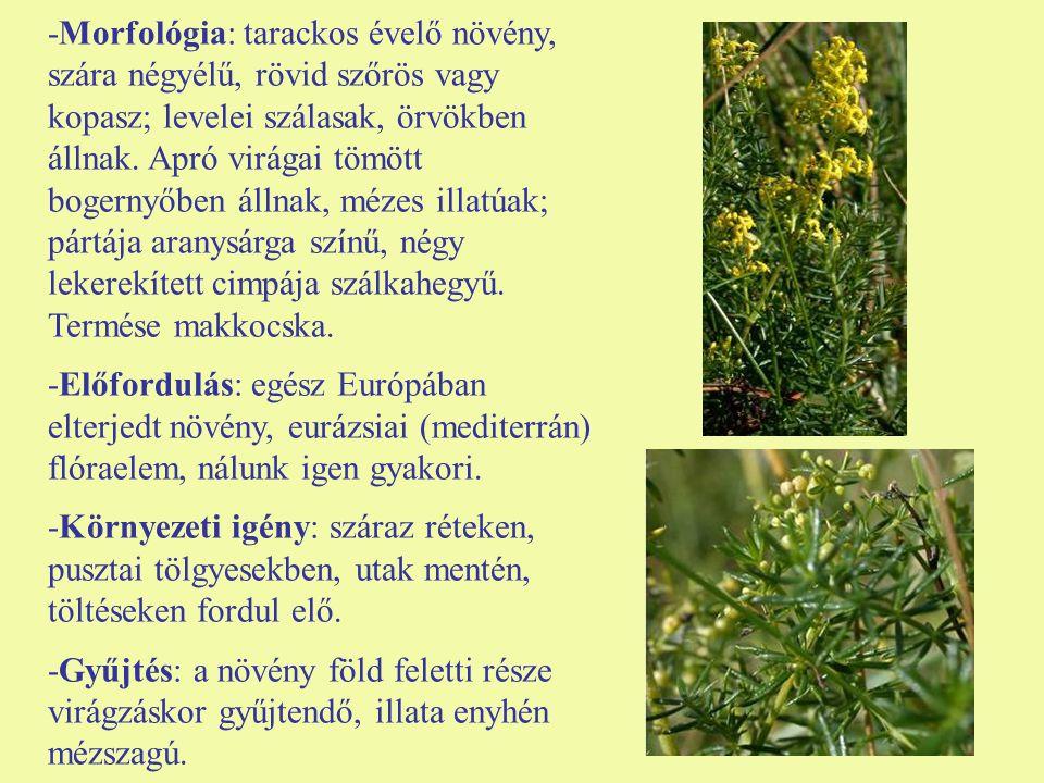-Morfológia: tarackos évelő növény, szára négyélű, rövid szőrös vagy kopasz; levelei szálasak, örvökben állnak. Apró virágai tömött bogernyőben állnak, mézes illatúak; pártája aranysárga színű, négy lekerekített cimpája szálkahegyű. Termése makkocska.