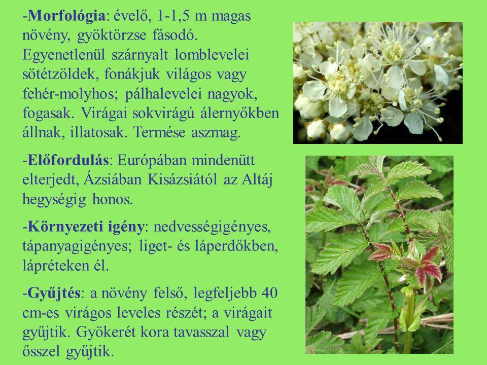 -Morfológia: évelő, 1-1,5 m magas növény, gyöktörzse fásodó