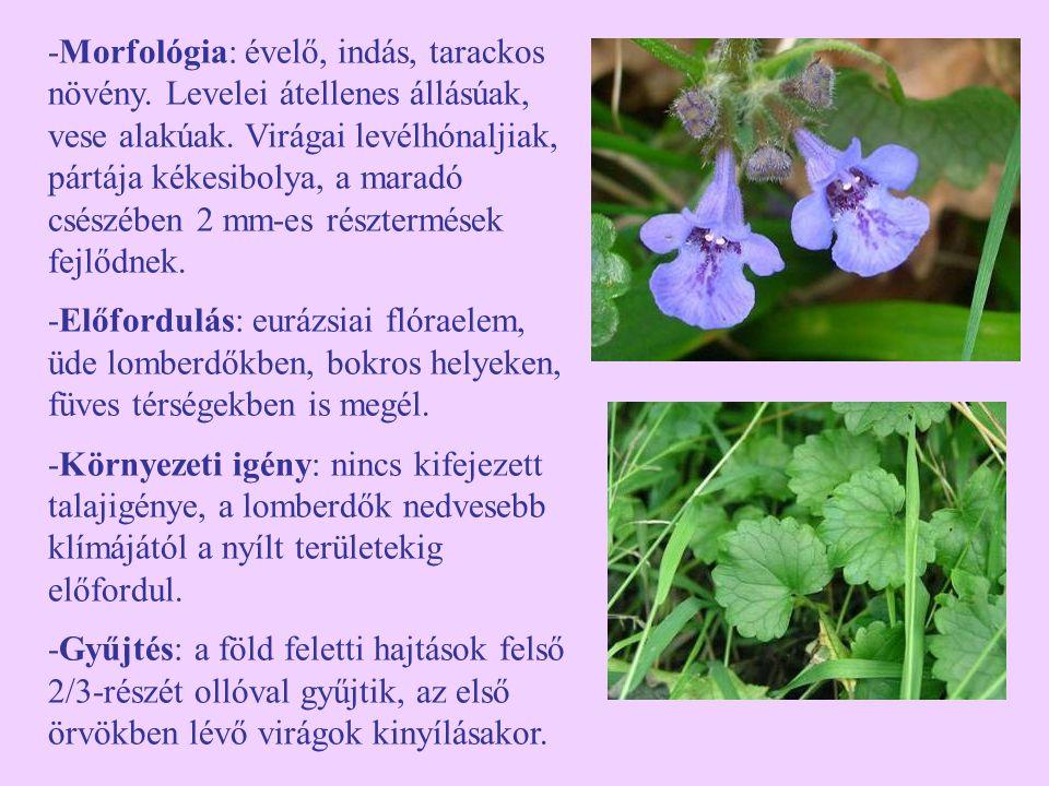 -Morfológia: évelő, indás, tarackos növény