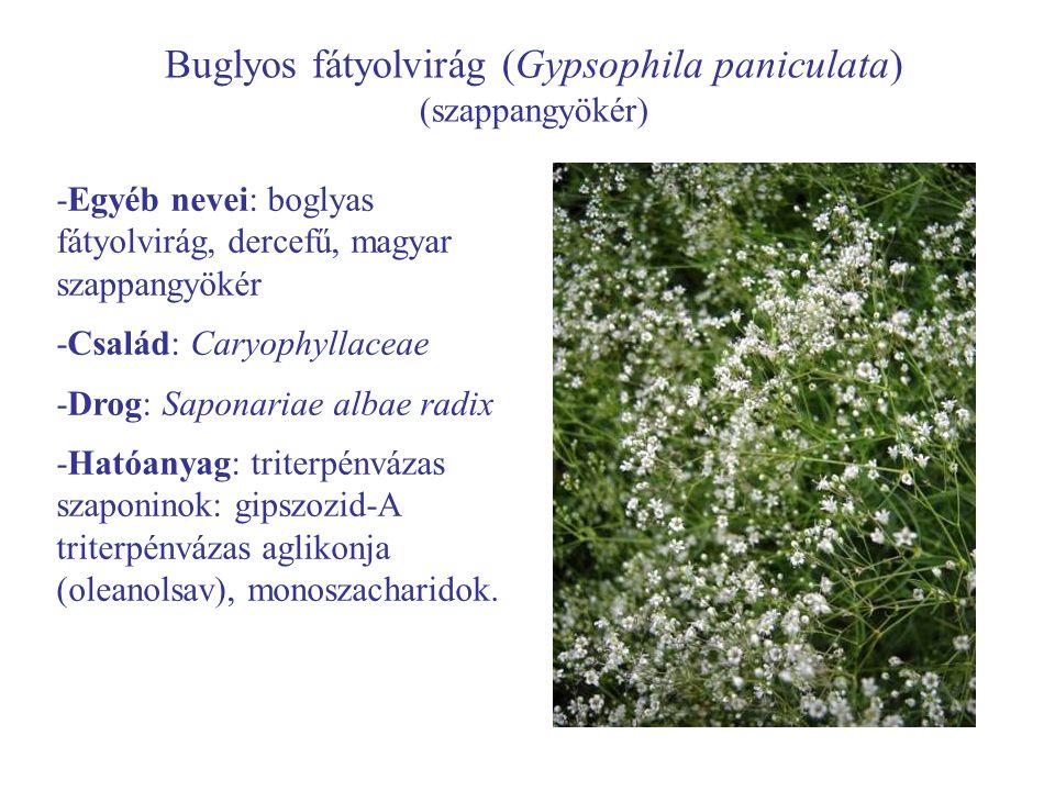 Buglyos fátyolvirág (Gypsophila paniculata)
