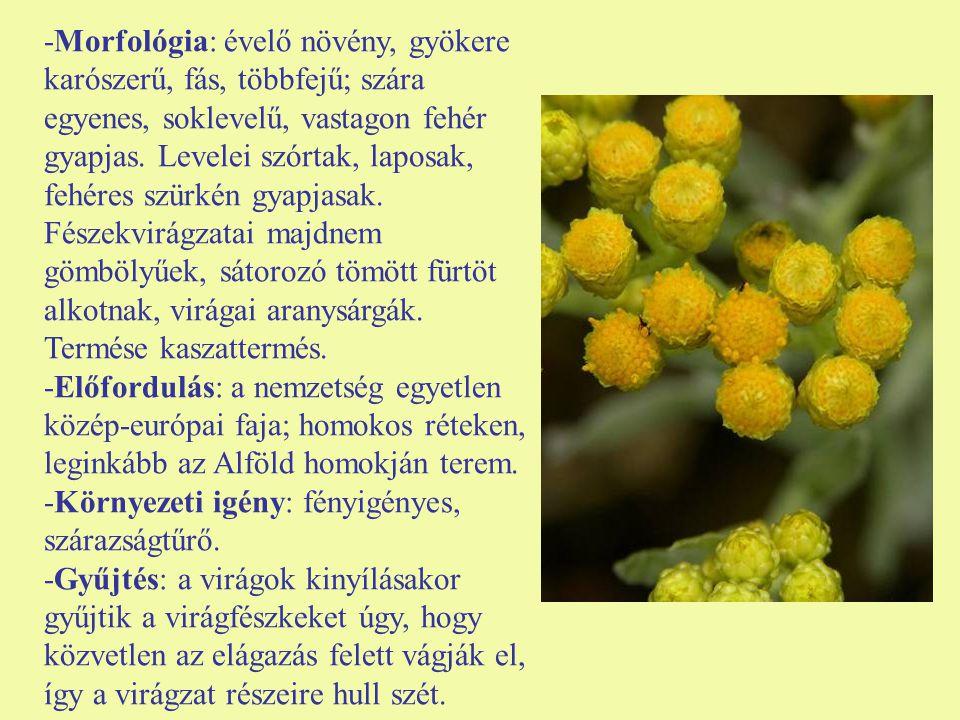 -Morfológia: évelő növény, gyökere karószerű, fás, többfejű; szára egyenes, soklevelű, vastagon fehér gyapjas. Levelei szórtak, laposak, fehéres szürkén gyapjasak. Fészekvirágzatai majdnem gömbölyűek, sátorozó tömött fürtöt alkotnak, virágai aranysárgák. Termése kaszattermés.