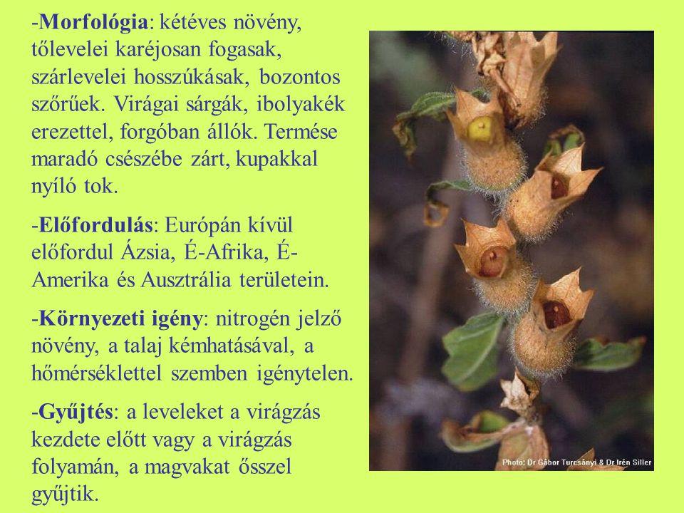 -Morfológia: kétéves növény, tőlevelei karéjosan fogasak, szárlevelei hosszúkásak, bozontos szőrűek. Virágai sárgák, ibolyakék erezettel, forgóban állók. Termése maradó csészébe zárt, kupakkal nyíló tok.