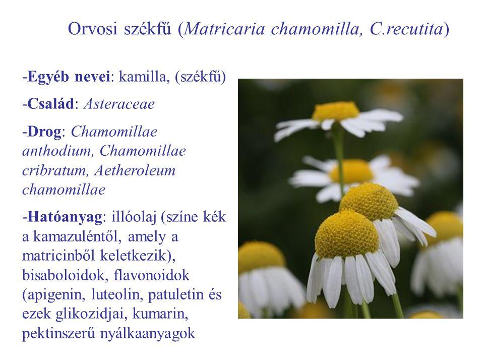Orvosi székfű (Matricaria chamomilla, C.recutita)