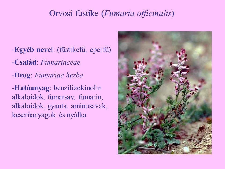 Orvosi füstike (Fumaria officinalis)