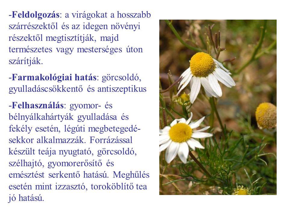 -Feldolgozás: a virágokat a hosszabb szárrészektől és az idegen növényi részektől megtisztítják, majd természetes vagy mesterséges úton szárítják.