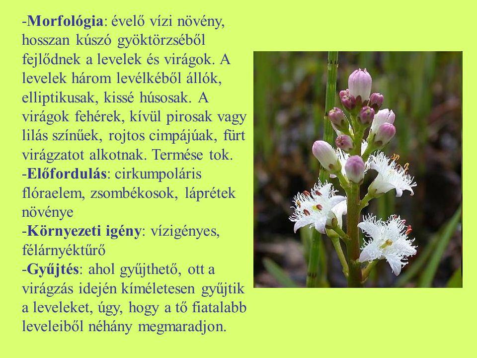 -Morfológia: évelő vízi növény, hosszan kúszó gyöktörzséből fejlődnek a levelek és virágok. A levelek három levélkéből állók, elliptikusak, kissé húsosak. A virágok fehérek, kívül pirosak vagy lilás színűek, rojtos cimpájúak, fürt virágzatot alkotnak. Termése tok.