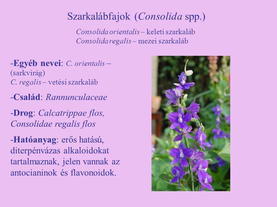 Szarkalábfajok (Consolida spp.)