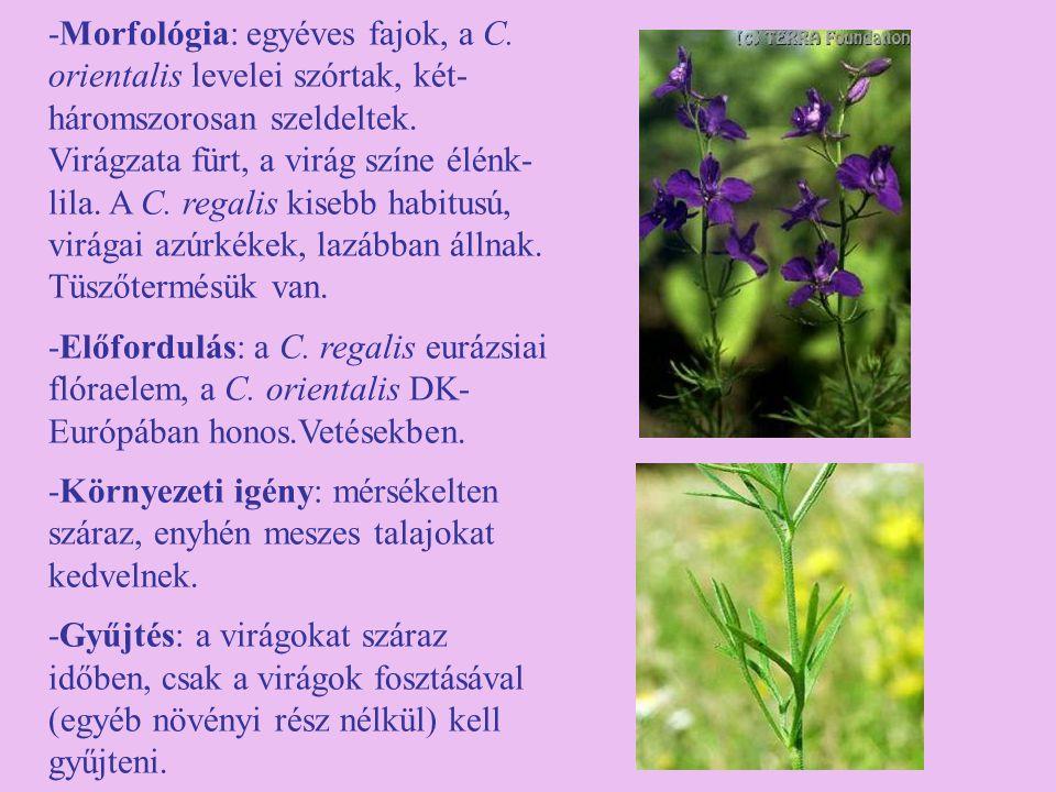 -Morfológia: egyéves fajok, a C