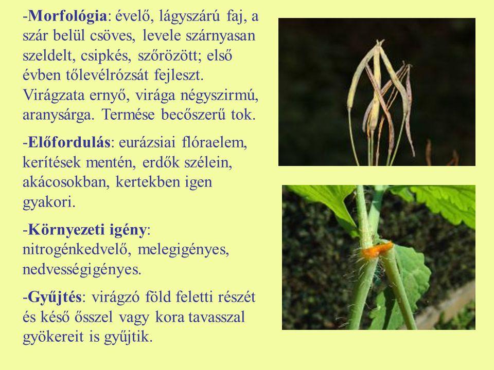-Morfológia: évelő, lágyszárú faj, a szár belül csöves, levele szárnyasan szeldelt, csipkés, szőrözött; első évben tőlevélrózsát fejleszt. Virágzata ernyő, virága négyszirmú, aranysárga. Termése becőszerű tok.
