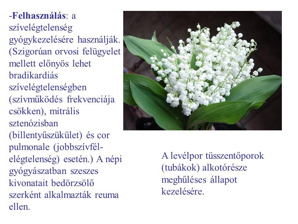 -Felhasználás: a szívelégtelenség gyógykezelésére használják