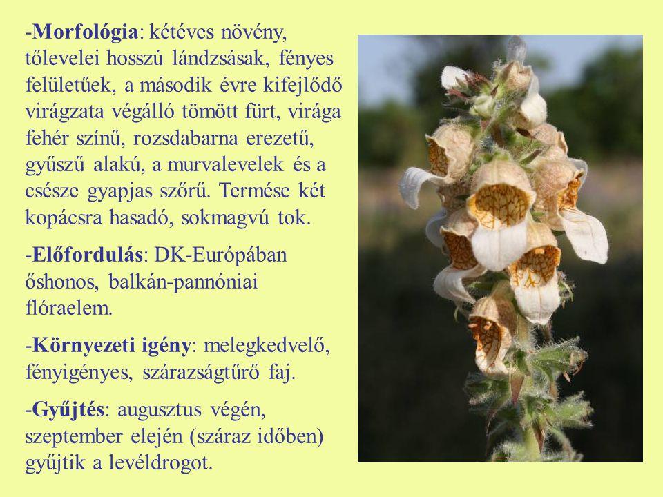 -Morfológia: kétéves növény, tőlevelei hosszú lándzsásak, fényes felületűek, a második évre kifejlődő virágzata végálló tömött fürt, virága fehér színű, rozsdabarna erezetű, gyűszű alakú, a murvalevelek és a csésze gyapjas szőrű. Termése két kopácsra hasadó, sokmagvú tok.