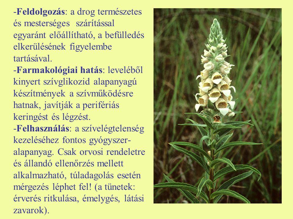 -Feldolgozás: a drog természetes és mesterséges szárítással egyaránt előállítható, a befülledés elkerülésének figyelembe tartásával.