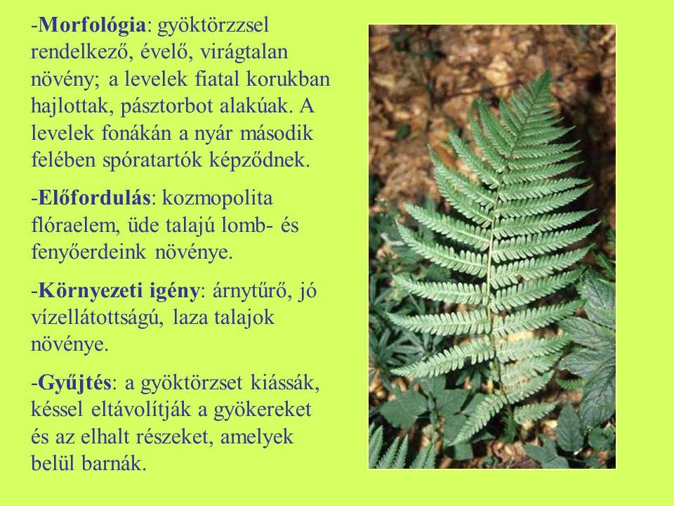 -Morfológia: gyöktörzzsel rendelkező, évelő, virágtalan növény; a levelek fiatal korukban hajlottak, pásztorbot alakúak. A levelek fonákán a nyár második felében spóratartók képződnek.