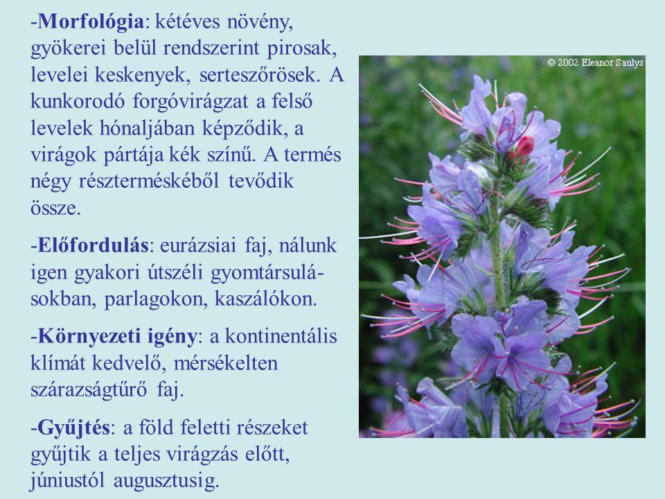 -Morfológia: kétéves növény, gyökerei belül rendszerint pirosak, levelei keskenyek, serteszőrösek. A kunkorodó forgóvirágzat a felső levelek hónaljában képződik, a virágok pártája kék színű. A termés négy részterméskéből tevődik össze.
