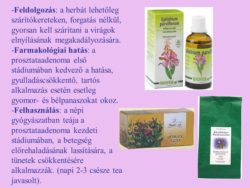 -Feldolgozás: a herbát lehetőleg szárítókereteken, forgatás nélkül, gyorsan kell szárítani a virágok elnyílásának megakadályozására.