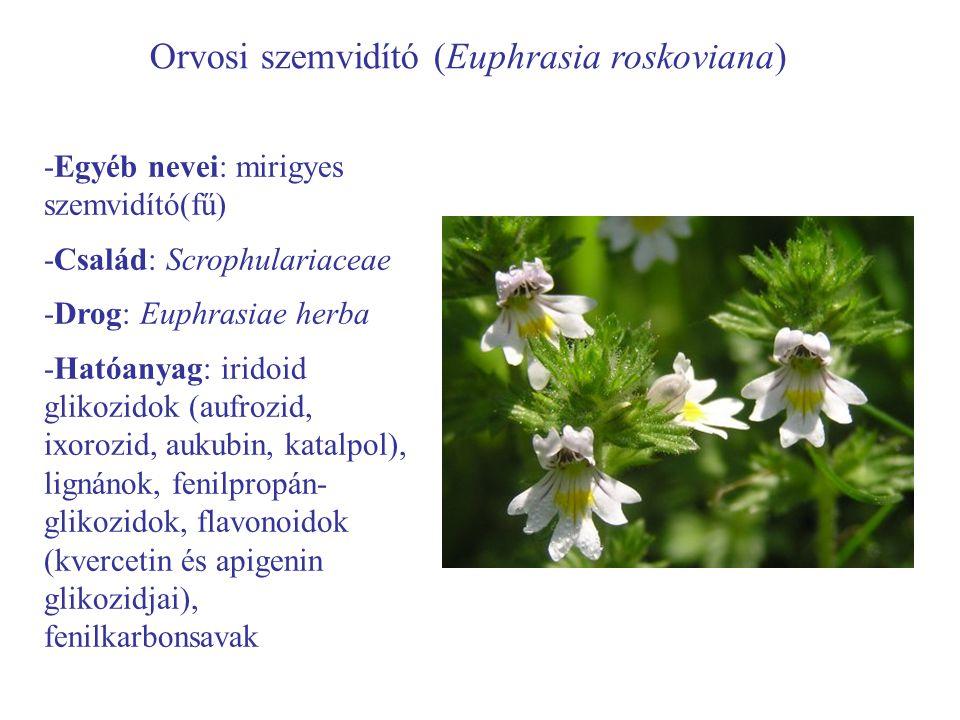 Orvosi szemvidító (Euphrasia roskoviana)