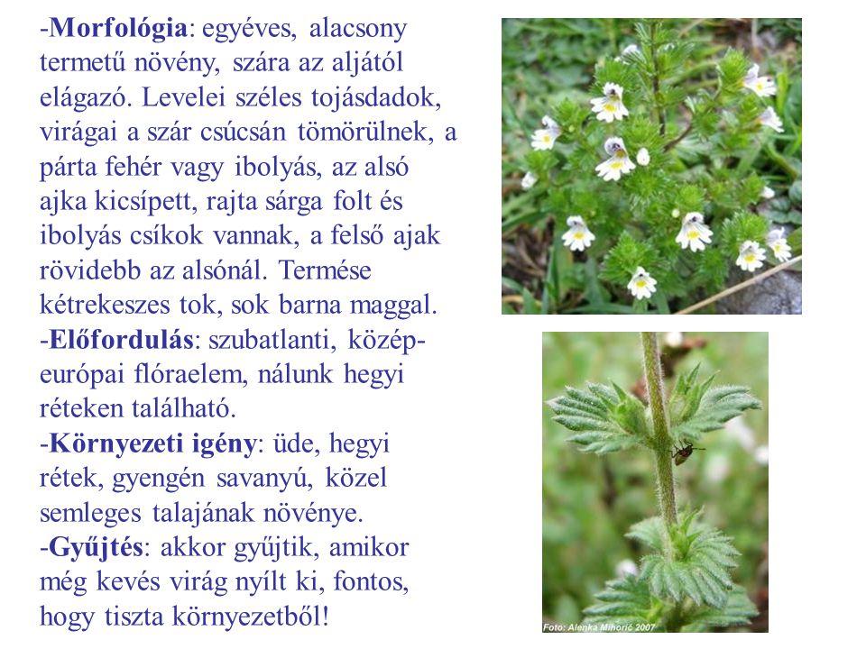 -Morfológia: egyéves, alacsony termetű növény, szára az aljától elágazó. Levelei széles tojásdadok, virágai a szár csúcsán tömörülnek, a párta fehér vagy ibolyás, az alsó ajka kicsípett, rajta sárga folt és ibolyás csíkok vannak, a felső ajak rövidebb az alsónál. Termése kétrekeszes tok, sok barna maggal.