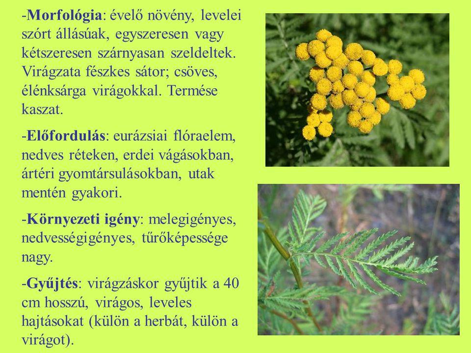 -Morfológia: évelő növény, levelei szórt állásúak, egyszeresen vagy kétszeresen szárnyasan szeldeltek. Virágzata fészkes sátor; csöves, élénksárga virágokkal. Termése kaszat.