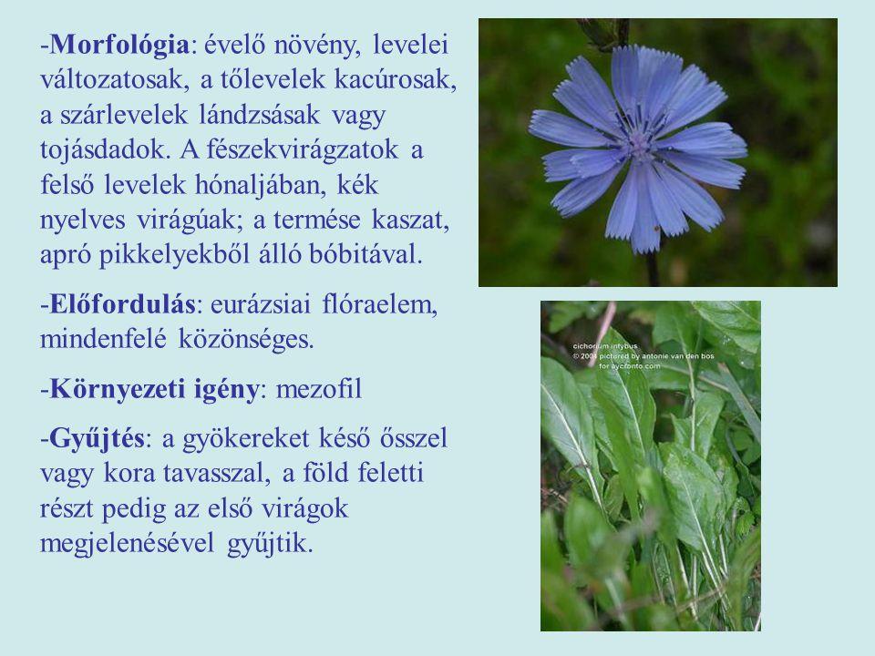 -Morfológia: évelő növény, levelei változatosak, a tőlevelek kacúrosak, a szárlevelek lándzsásak vagy tojásdadok. A fészekvirágzatok a felső levelek hónaljában, kék nyelves virágúak; a termése kaszat, apró pikkelyekből álló bóbitával.
