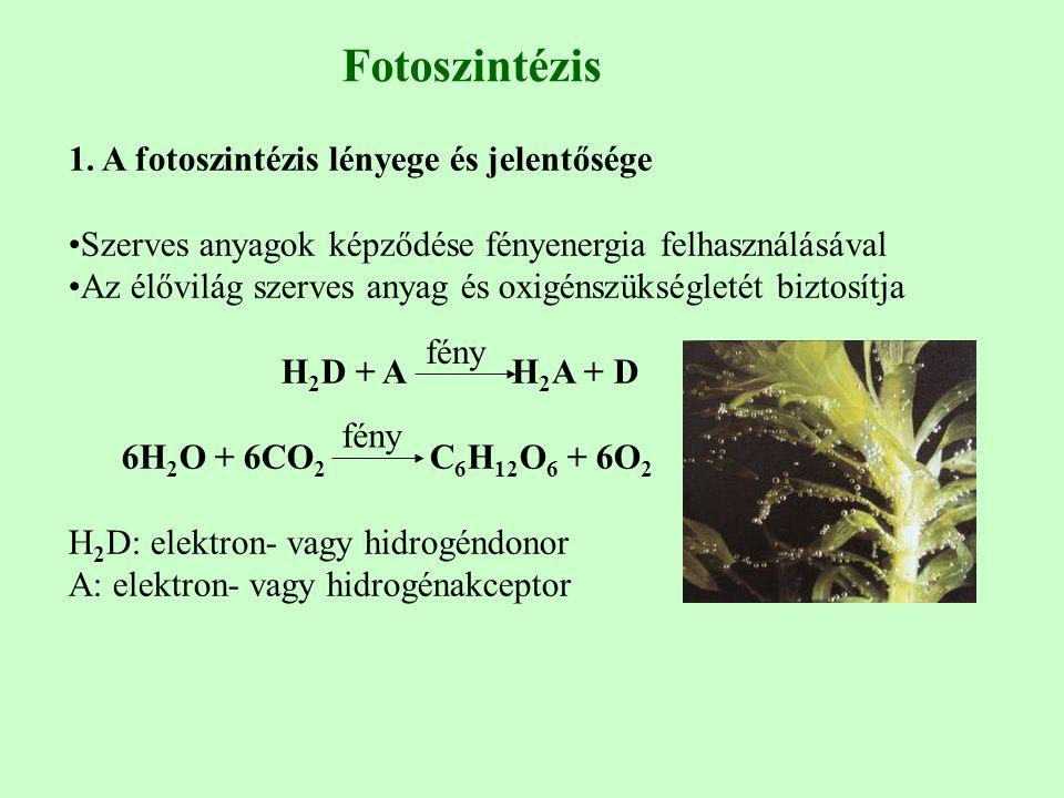 Fotoszintézis 1. A fotoszintézis lényege és jelentősége