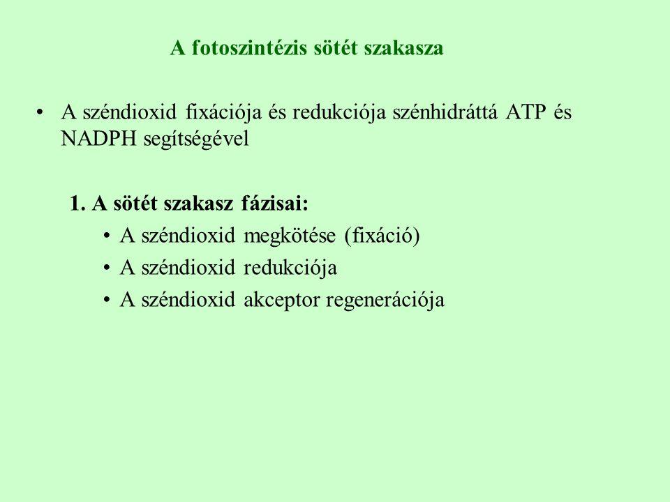 A fotoszintézis sötét szakasza