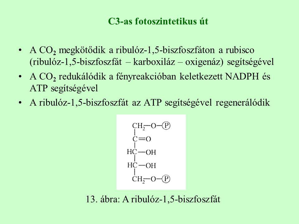 13. ábra: A ribulóz-1,5-biszfoszfát