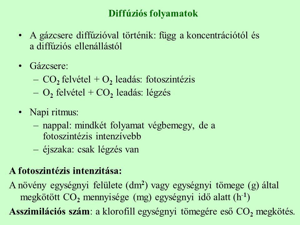 Diffúziós folyamatok A gázcsere diffúzióval történik: függ a koncentrációtól és a diffúziós ellenállástól.