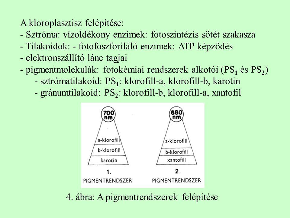 A kloroplasztisz felépítése: