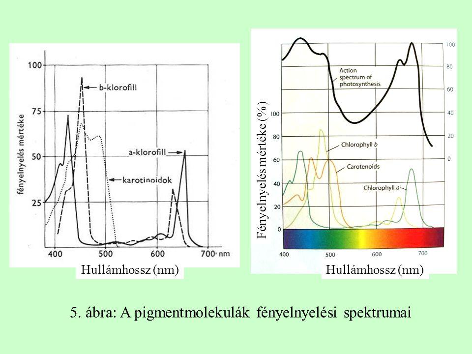 5. ábra: A pigmentmolekulák fényelnyelési spektrumai