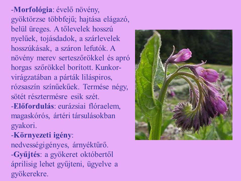 -Morfológia: évelő növény, gyöktörzse többfejű; hajtása elágazó, belül üreges. A tőlevelek hosszú nyelűek, tojásdadok, a szárlevelek hosszúkásak, a száron lefutók. A növény merev serteszőrökkel és apró horgas szőrökkel borított. Kunkor-virágzatában a párták liláspiros, rózsaszín színűekűek. Termése négy, sötét résztermésre esik szét.