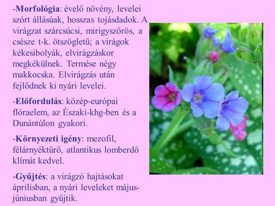 -Morfológia: évelő növény, levelei szórt állásúak, hosszas tojásdadok