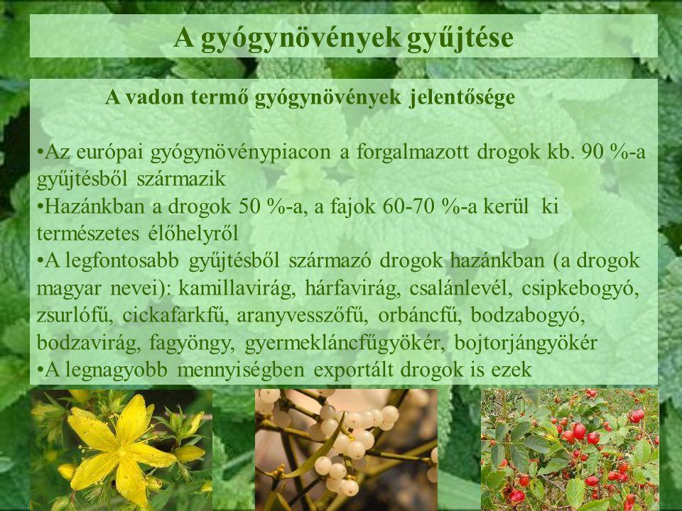 A gyógynövények gyűjtése