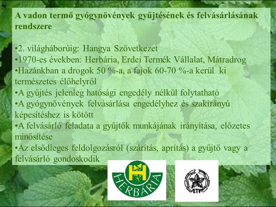 A vadon termő gyógynövények gyűjtésének és felvásárlásának rendszere