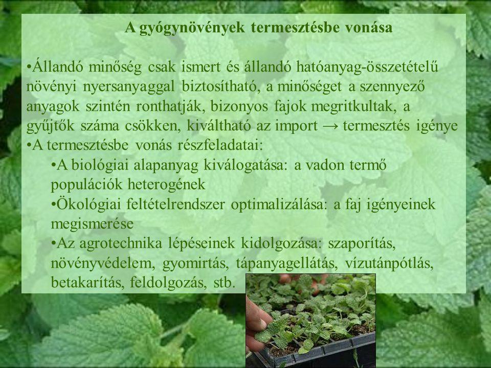 A gyógynövények termesztésbe vonása