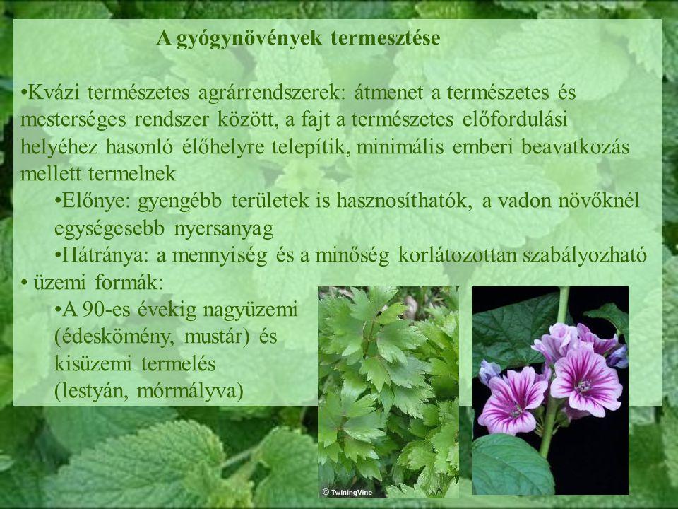 A gyógynövények termesztése