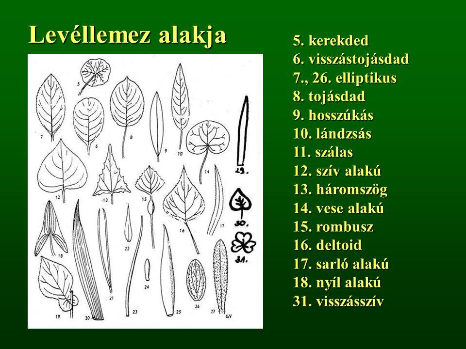 Levéllemez alakja 5. kerekded 6. visszástojásdad 7., 26. elliptikus