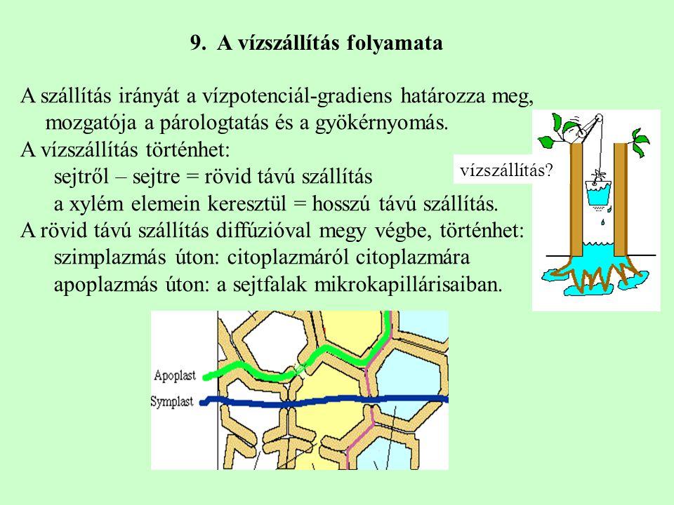 9. A vízszállítás folyamata