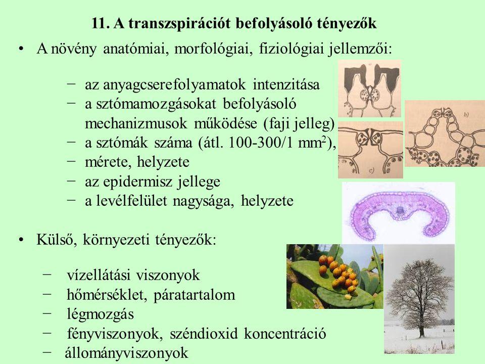 11. A transzspirációt befolyásoló tényezők