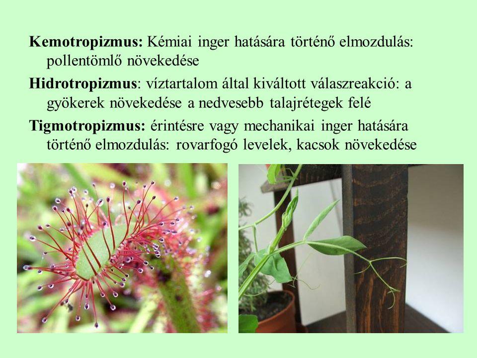 Kemotropizmus: Kémiai inger hatására történő elmozdulás: pollentömlő növekedése