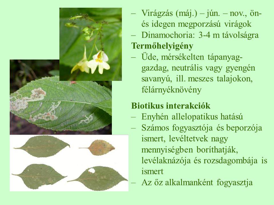Virágzás (máj.) – jún. – nov., ön- és idegen megporzású virágok
